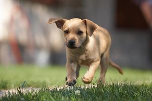 Οχτώ χρόνια φυλάκιση σε δολοφόνο σκύλου