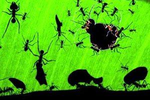 Όταν τα μυρμήγκια πιάνουν «δουλειά»