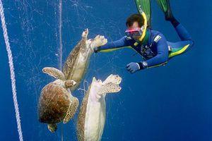 Οι θαλάσσιες χελώνες κινδυνεύουν