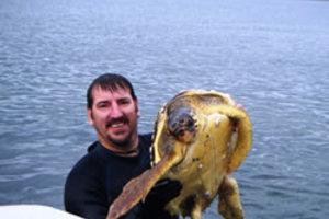 Συνεχίζοντας το «μαρκάρισμα» χελωνών στον Αμβρακικό