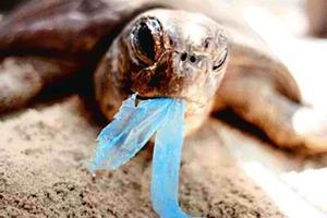 «Πρωταθλητής» των σκουπιδιών στις θάλασσες το πλαστικό