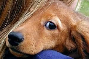 Πάρτε ένα σκύλο αν θέλετε να δείχνετε νεότεροι