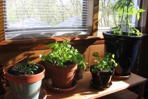 Πώς καταλαβαίνουμε εάν τα φυτά χρειάζονται πότισμα