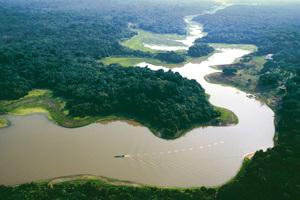 Δολοφονήθηκε οικολόγος σε παρθένο τμήμα του Αμαζονίου