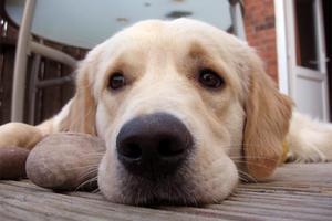 Ορίστηκε η δίκη του βοσκού που τύφλωσε το σκύλο του
