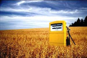 Πόσο επιβλαβή για τον πλανήτη είναι τα βιοκαύσιμα;
