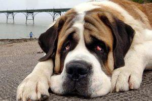 Βοσκός «τέρας» τύφλωσε το σκύλο του