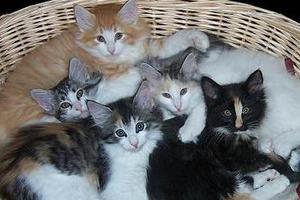 Πρόγραμμα στειρώσεων αδέσποτων γατών