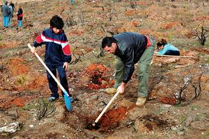 Ξεκινά πρόγραμμα αναδασώσεων εθελοντικού χαρακτήρα στη Θεσσαλονίκη