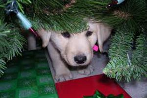 Φεύγετε για τα Χριστούγεννα;