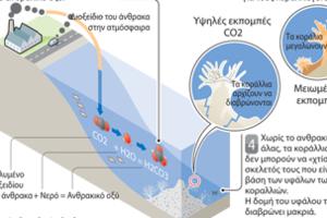Η οξίνιση των ωκεανών απειλεί τα υδάτινα οικοσυστήματα