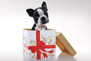 Μη χαρίζετε ζωάκια τα Χριστούγεννα