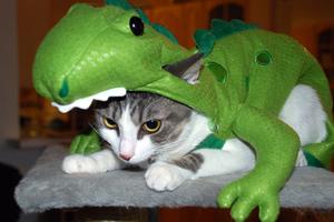 Περίεργα ντυσίματα γατών