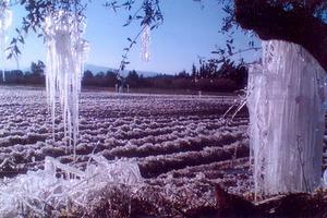Τον Οκτώβριο οι αποζημιώσεις στους παραγωγούς της Λακωνίας