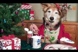 Οι χριστουγεννιάτικες ετοιμασίες ενός σκύλου