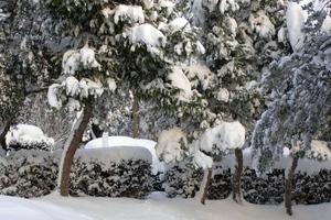 Δέντρα και αντικείμενα στους δρόμους από την κακοκαιρία