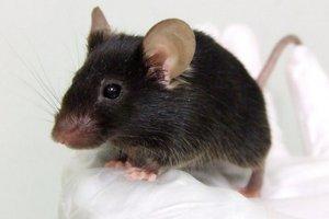 Έφοδος… ποντικιών στο Κοινοβούλιο της Βραζιλίας