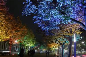 Η φυσική ομορφιά των δένδρων