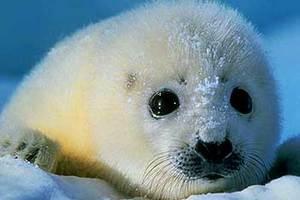 Καταφύγιο πάγου στην Αρκτική
