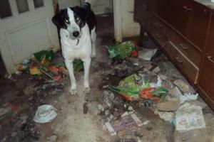 Σκύλος φύλαγε το νεκρό ιδιοκτήτη του