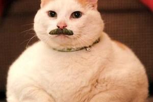 Γιατί οι γάτες έχουν άσπρα μουστάκια;