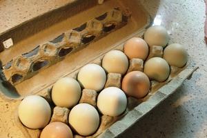Δεν έφτασαν στην Ελλάδα τα αυγά με τις διοξίνες