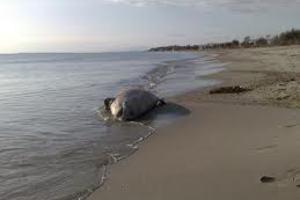 Νεκρό δελφίνι στον Αμβρακικό Κόλπο