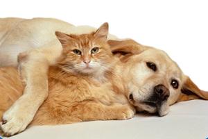 Πόσα ζωάκια μπορούμε να έχουμε σπίτι μας;