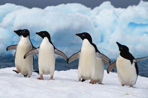 Οι πομποί βλάπτουν τους πιγκουίνους
