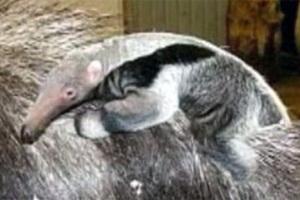 Γεννητούρια στο ζωολογικό κήπο της Σουηδίας