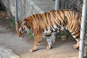 Χωρίς άδεια 14 από τους 15 ζωολογικούς κήπους στην Ελλάδα