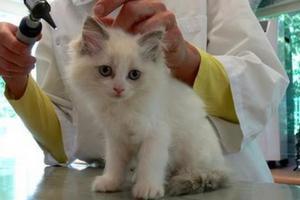 Δημοτικό κτηνιατρείο ιδρύεται στο Ρέθυμνο