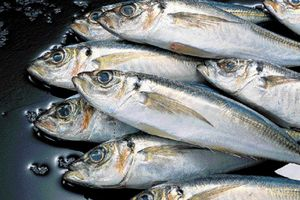 Τα κοινά σημεία του ανθρώπου με... τα ψάρια
