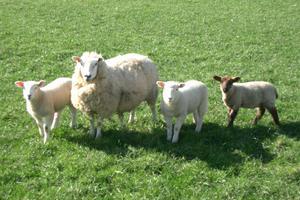 Πλήγμα για τους κτηνοτρόφους οι χαμηλές θερμοκρασίες