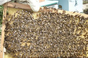Αγωνιούν οι μελισσοκόμοι των Χανίων