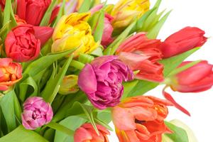 Διατηρήστε περισσότερο τα λουλούδια στο βάζο