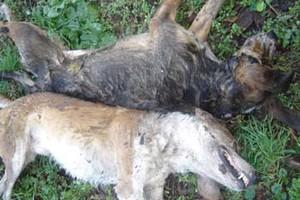 Επικήρυξη στους δολοφόνους σκύλων