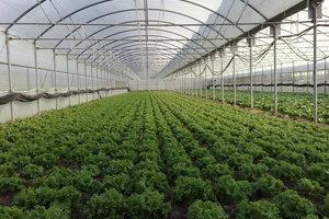 Στόχος η ενίσχυση καλλιεργειών θερμοκηπίου