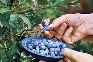 Σπάνιες ποικιλίες άγριων σπόρων στα Χανιά