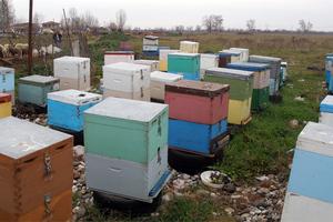 Εντοπίστηκε ο κλέφτης μελισσιών