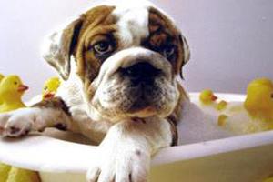 Δώστε στα ζωάκια σας τη φροντίδα που τους αξίζει
