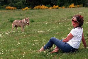«Οπισθοδρομικό» το κυνήγι λύκων στη Σουηδία