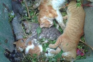 Δηλητηρίασαν γάτες σε γειτονιά της Κοζάνης