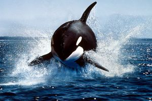 Θάλασσα: Μάθε, δράσε, προστάτεψε!