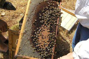 Αυτός ο ληστής ήταν τρελός για… μέλι
