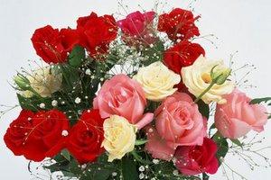 Τι συμβολίζουν τα τριαντάφυλλα