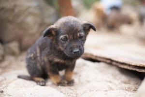 Είχαν στριμώξει σε ένα μικρό σπίτι 118 σκυλάκια
