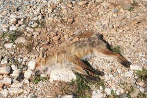 Κακοποιήσεις ζώων στην νότια Εύβοια