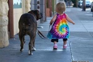 Θα υιοθετούσατε παιδί ή σκυλί;