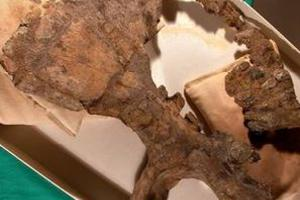 Εντοπίστηκαν υπολείμματα του μεγαλύτερου δεινοσαύρου που έχει ανακαλυφθεί μέχρι τώρα